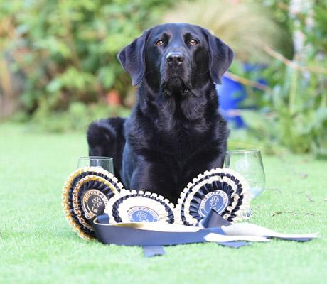 Cara_canine_massage_testimonial