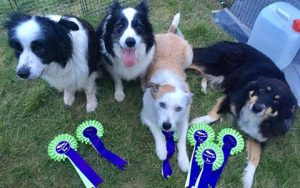 Testimonial_canine massage Jura_Tiree_Finn