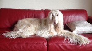 canine_massage_rosa