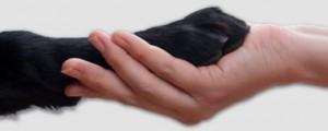 handshake between dog and hand