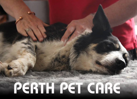 Canine Massage Workshop in Perth